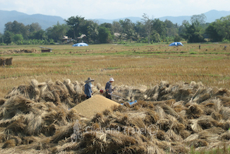 Full day bicycle tour east of Chiang Mai Thailand image